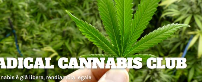 Semi di cannabis agli iscritti: l'ultima campagna scandalo dei Radicali