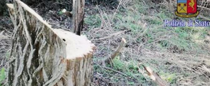 Scempio a Roma, tagliano alberi secolari in oasi protetta: rom arrestati