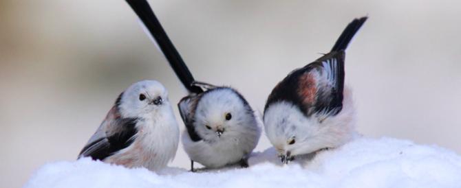 """L'appello: """"Animali sterminati dal gelo. Chiudete la stagione della caccia"""""""