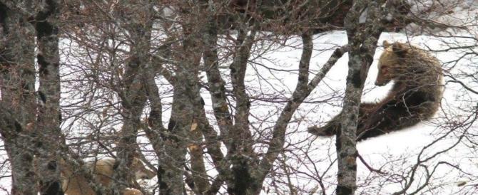 Laghi ghiacciati e boschi coperti di neve: così il freddo cambia le oasi Wwf