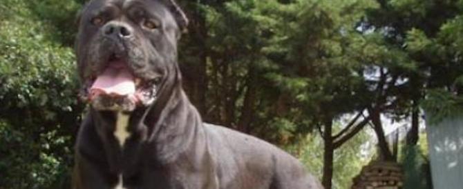 Firenze, scaglia il suo cane contro gli agenti per non finire in carcere