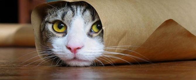 La festa del gatto spopola sul web. Appello contro le polpette avvelenate