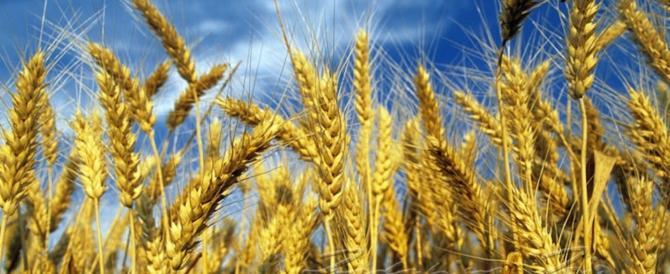 Sicilia, l'allarme di Coldiretti. «Siamo invasi dal grano straniero»