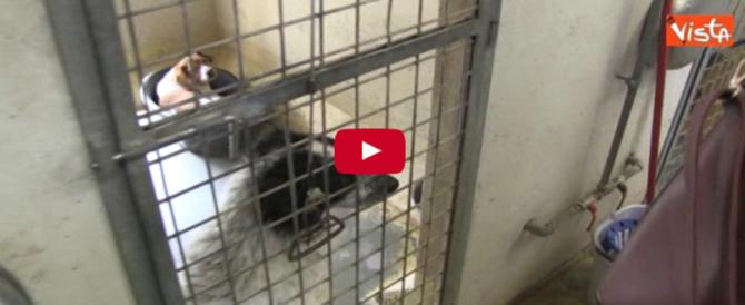 Gli sguardi languidi dei cani in attesa di adozione, di una seconda possibilità (video)