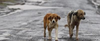"""«Divieto d'ingresso ai cani """"stranieri""""», accade in una città dell'Oregon"""
