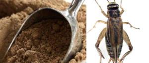 E adesso arrivano gli insetti da mangiare: al via la vendita in Svizzera