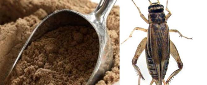 Dalla farina di grillo ai micrortaggi: ecco il cibo del futuro prossimo