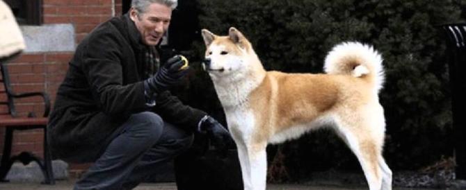 """""""Hachiko"""" diventa realtà: è in coma e il suo cagnolino ne attende il ritorno"""