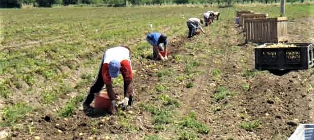 Agricoltura, persi centomila i posti di lavoro per la miopia dei nostri governi