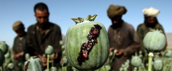 Arezzo, importavano oppio grezzo dall'Iran: sgominata banda di narcos