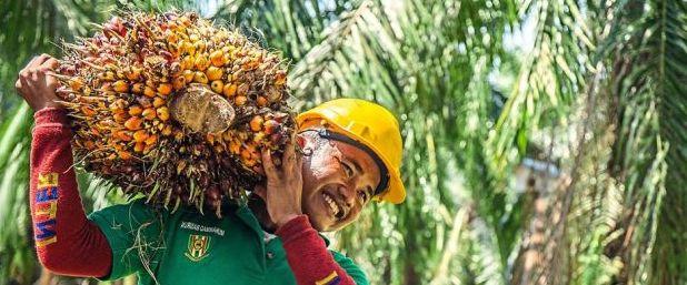 """La """"bufala"""" dell'olio di palma: è un attacco commerciale ma c'è chi ci crede"""