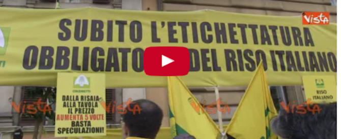 """Riso vietnamita nel piatto: l'ira degli agricoltori: """"L'Italia mortificata"""" (video)"""