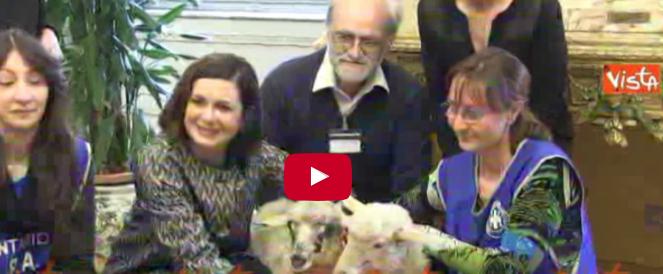 Laura Boldrini imita Berlusconi e adotta due pecorelle, Gioia e Gaia (video)