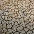 Roghi e siccità, 10 Regioni pronte a chiedere lo stato di calamità