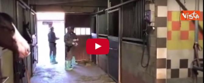 «Hai chiamato Striscia la notizia»: legnate allo stalliere (video)