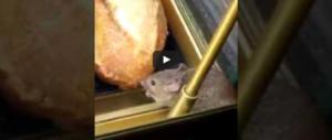 Un topino e il suo panino. E l'ospite indesiderato mangia e scappa (video)