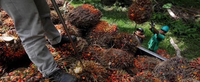 Olio di palma, calano le importazioni: rivincita del burro o complotto mondiale?