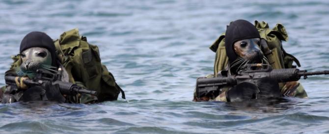 Yemen, blitz dei Navy Seals contro al Qaeda: sette jihadisti uccisi (video)