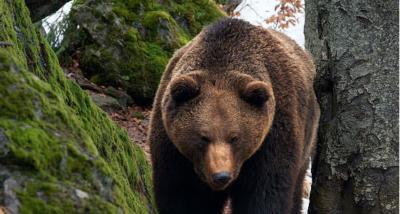 Canada, vacanze e hotel di lusso gratis a chi non va a caccia di orsi