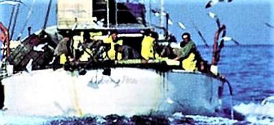 Pesce sulle nostre tavole, solo un chilo su due viene dal Mediterraneo