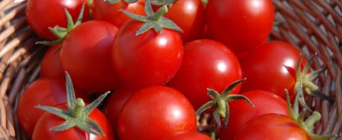 I pomodori (ma solo del Sud italia) efficaci contro il cancro gastrico