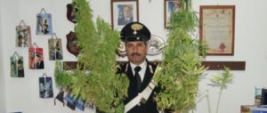 La Cannabis terapeutica fa sballare i conti della Lorenzin e dei farmacisti