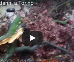 Arriva la furia Circe: tornado, nubifragi e alberi abbattuti (video)