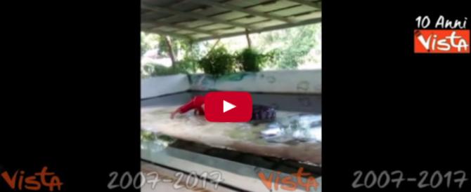 Terrore in diretta: il domatore mette la testa nelle fauci del coccodrillo, ma…(VIDEO)