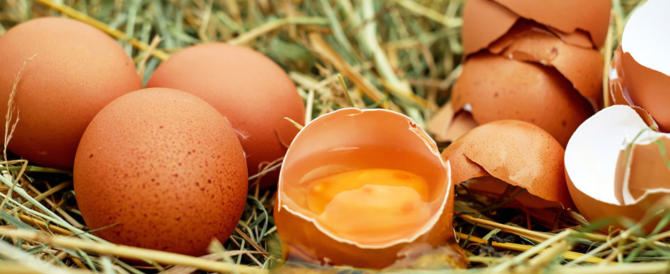 Un uovo al giorno: ecco il segreto per far crescere più forti i bambini