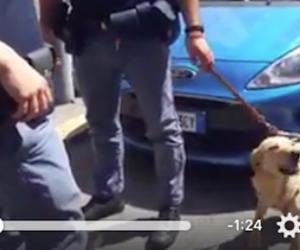 Roma, poliziotti liberano il cane da un'auto sotto al sole. Lui ringrazia così (video)