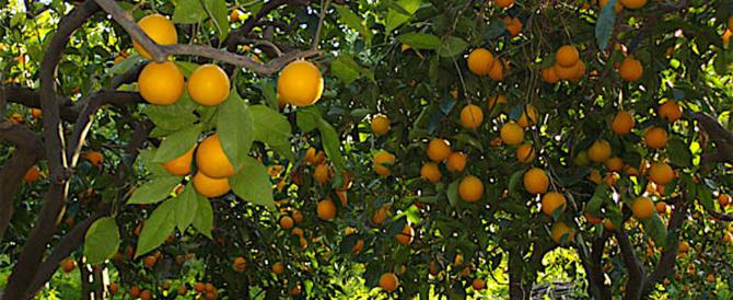 Sicilia: truffa di 80 milioni sui contributi all'agricoltura, centinaia di indagati
