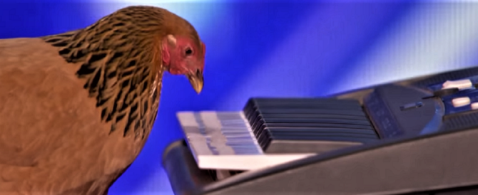 Folla in delirio per la gallina pianista che suona l'inno americano (video)