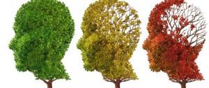 Ricerca, l'olio d'oliva protegge dall'Alzheimer. Ecco in che modo