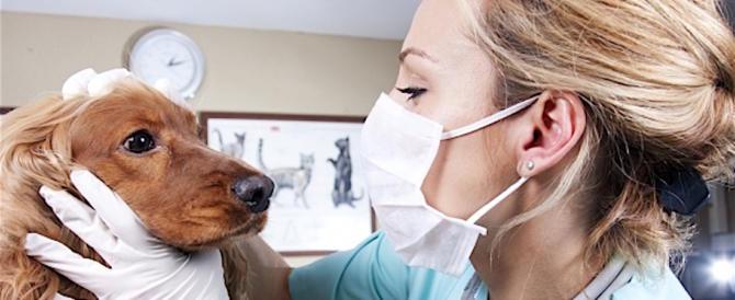"""Appello dei veterinari: """"Non date agli animali medicine per l'essere umano"""""""
