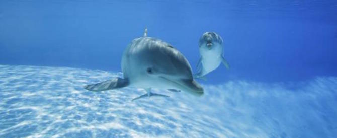 È la Giornata mondiale degli Oceani: a Zoomarine tutti possono aiutare il mare