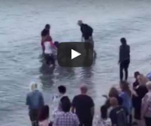 """Defino """"curioso"""" si arena in spiaggia, i bagnanti lo salvano così (video)"""