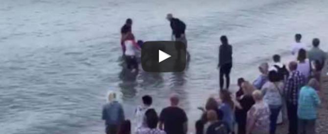 """Delfino """"curioso"""" si arena in spiaggia, i bagnanti lo salvano così (video)"""