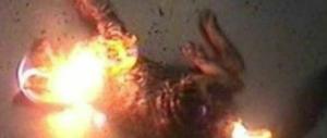 L'ultima follia dei piromani: gatti arsi vivi per innescare meglio gli incendi