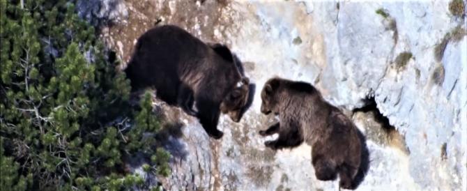 Trentino, ennesimo incontro ravvicinato con l'orso: ferito un uomo