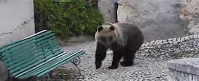 Non solo Trentino: un orso entra in una casa – abitata – in provincia dell'Aquila