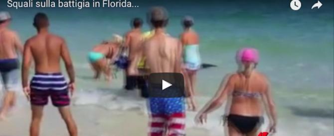 Squali in spiaggia: la curiosità e la paura dei bagnanti (video)