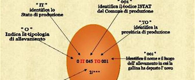 Uova contaminate, occhio al guscio: ecco come scoprire quelle a rischio