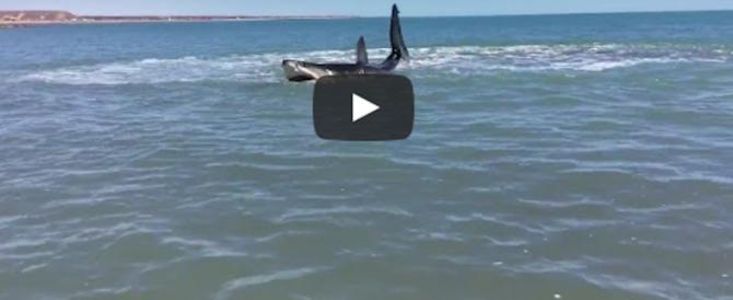 L'estate degli squali: l'ultimo è stato preso a calci e pugni da un surfista (2 Video)