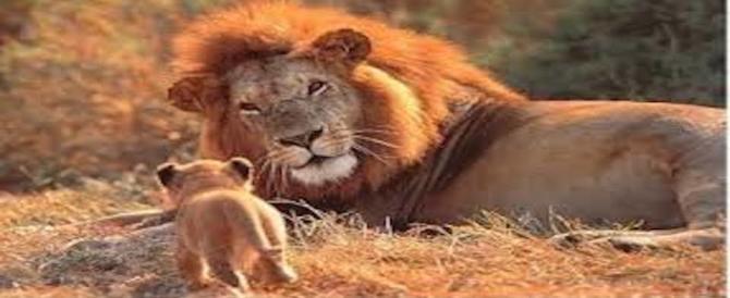 È il giorno del leone: uno splendido animale a rischio di estinzione