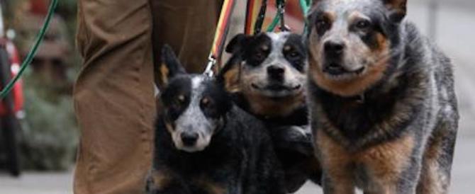 Protesta per i bisogni dei cani sotto casa. E viene multato dai vigili