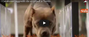 Pattuglia di carabinieri aggredita da un pitbull: il proprietario fumava spinelli (video)