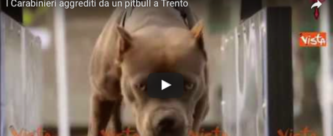 Pattuglia di carabinieri aggredita da un pitbull: il proprietario fumava spinelli (video)