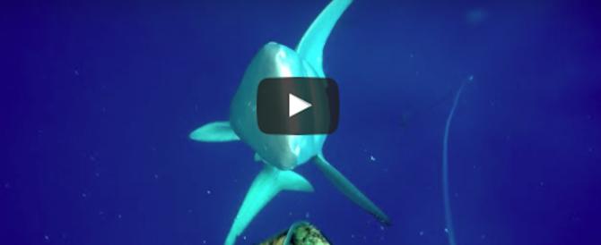 Furibonda lotta in mare tra un sub e due squali per un tonno pescato (video)