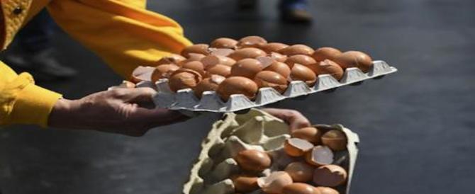 90 mila uova al fipronil sequestrate dai Nas a Viterbo e Ancona