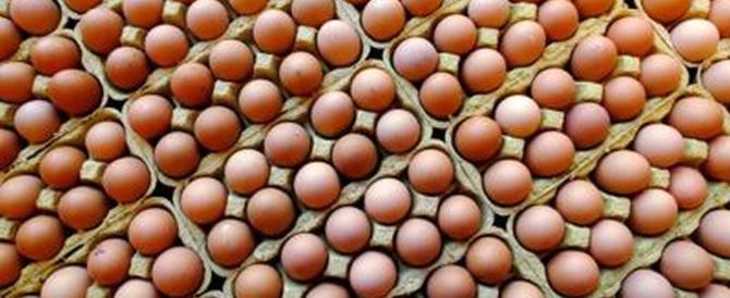 Uova contaminate, a Bologna e Parma sequestrati tre lotti sospetti
